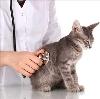 Ветеринарные клиники в Выездном